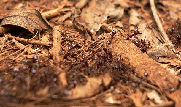 Впечатляющие причины, делающие муравьёв удивительными существами