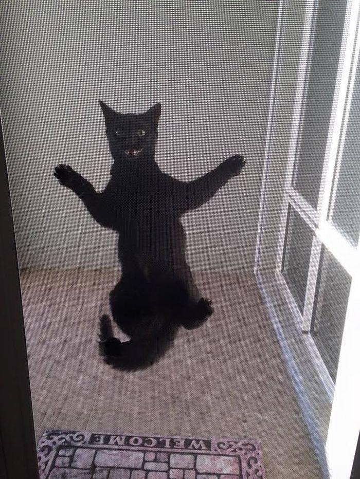 3. «Я не знаю, сколько ещё смогу так продержаться… спасайте!» животные, кот, окно