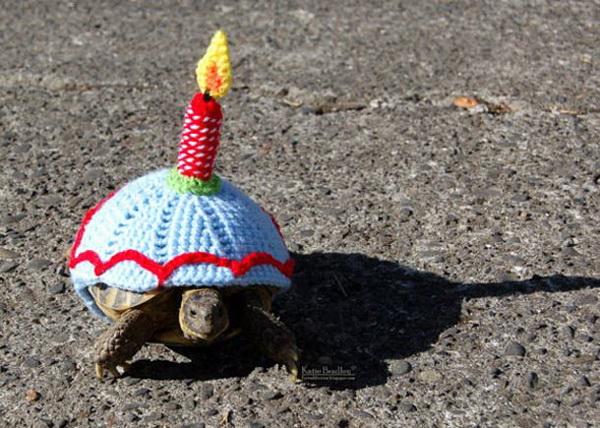 Черепаха с именинным тортом на спине.
