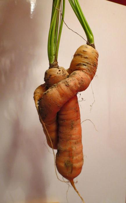 Даже морковь нуждается в любви.