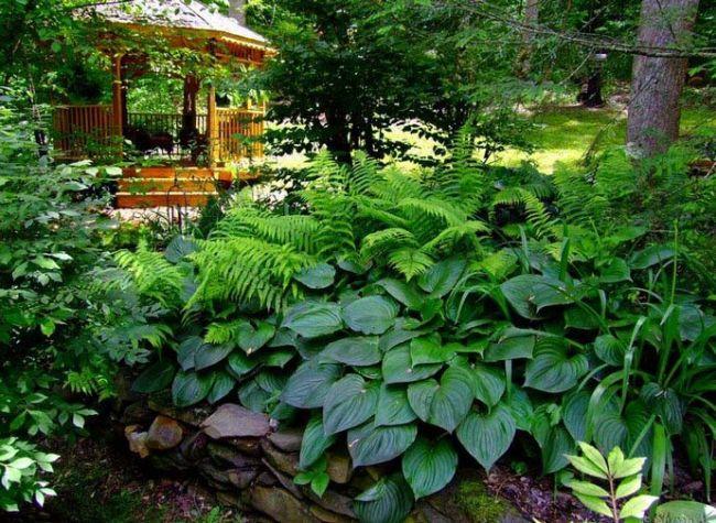 Какие растения лучше сажать в тени 54