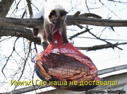 http://4.404content.com/1/B0/99/821734193768433568/fullsize.jpg