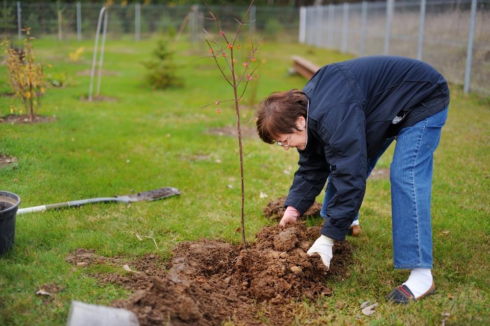 Сажать ягодные кустарники осенью 324