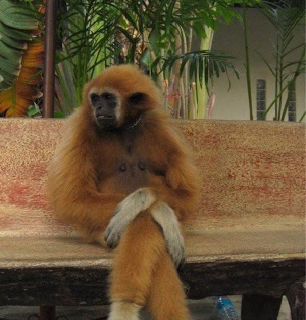 И зачем я орангутану отказала, теперь вот сидеть тут, скучать... животные, нечего делать, прикол, приуныл