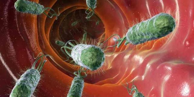 Миф о клетчатке: почему ее избыток опасен