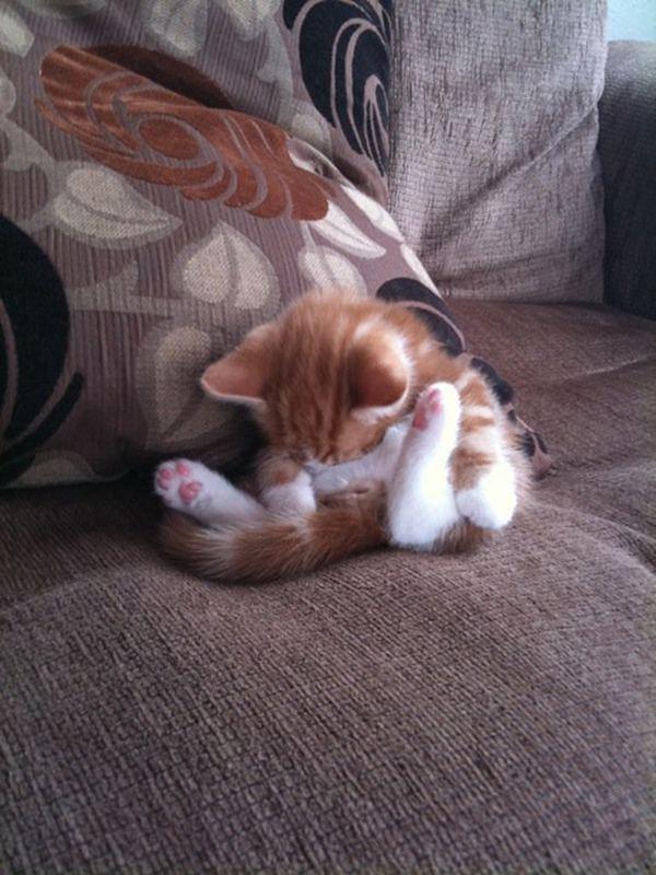 Топ лучших кошачьих поз для сна