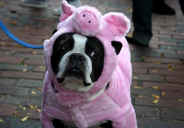 мысли собак, смешные собаки, собаки человеческое веселье, собаки веселье люди