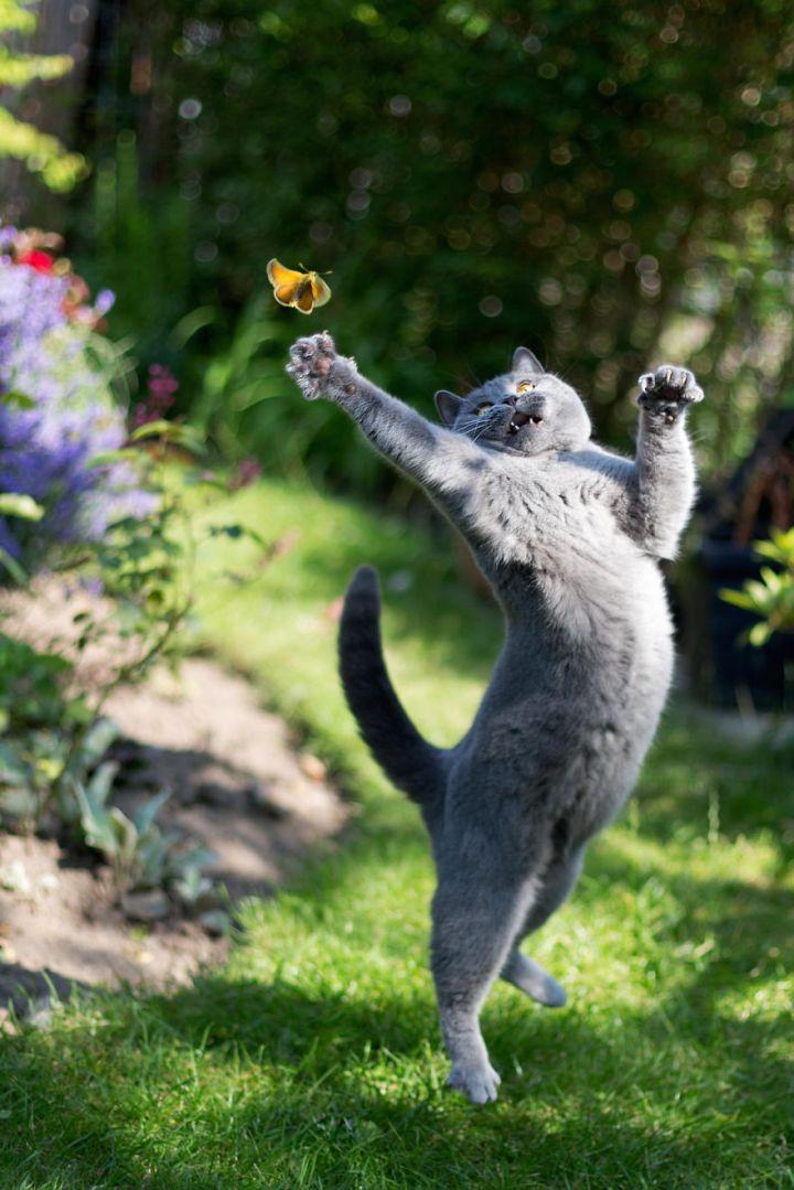 кошка и бабочка
