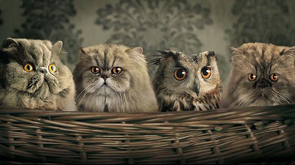 8.  животные, коты, юмор