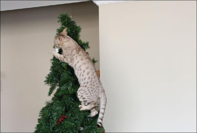2. животные, коты, юмор