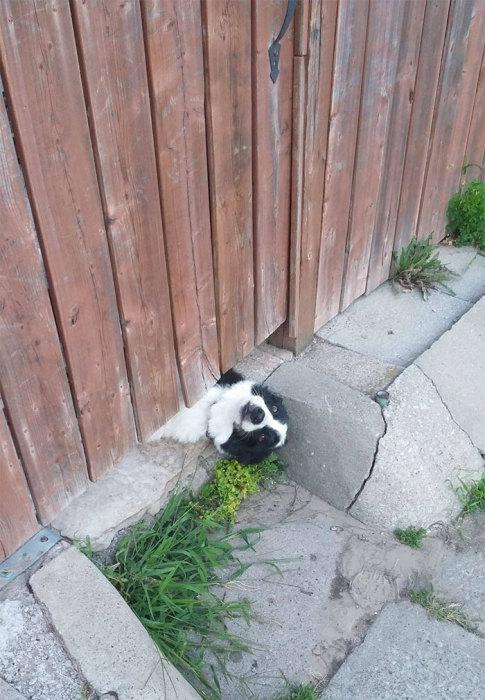 Озорной и проворный пёсик, который очень хочет подружиться.