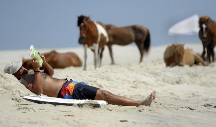 На пляже острова мирно гуляют дикие лошади.
