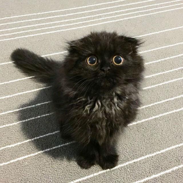 Вас буквально загипнотизируют фотографии с черным котиком, а ведь это всего лишь фотографии. Только представьте, какой он в жизни :) Вы бы смогли устоять перед таким взглядом? Гимо, животные, котик