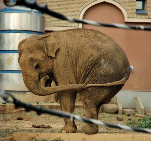 У слонов свои методы борьбы со скукой животные, нечего делать, прикол, приуныл