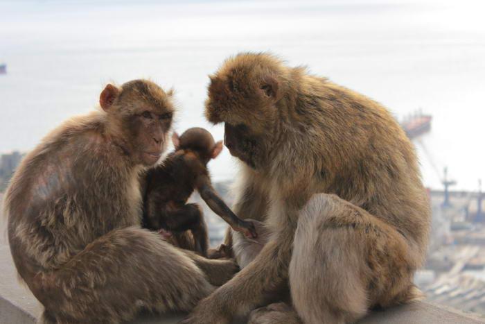 10 самых умных животных