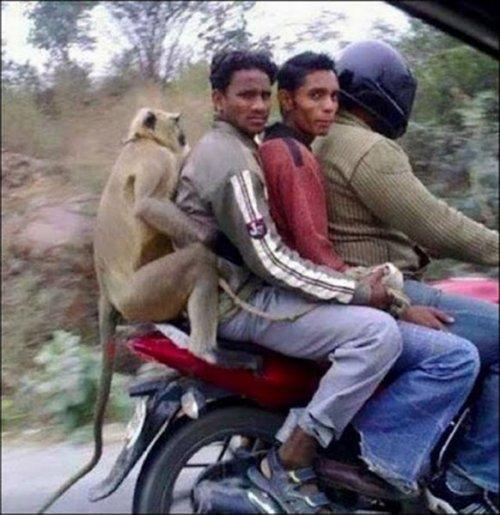 Тем временем в Индии (30 фото)