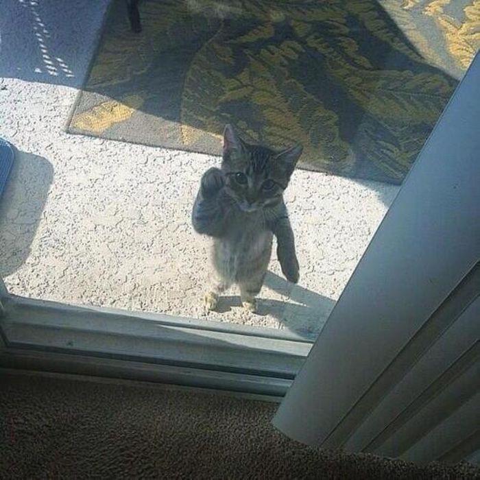 1. «Будьте людьми, откройте уже один раз…» животные, кот, окно