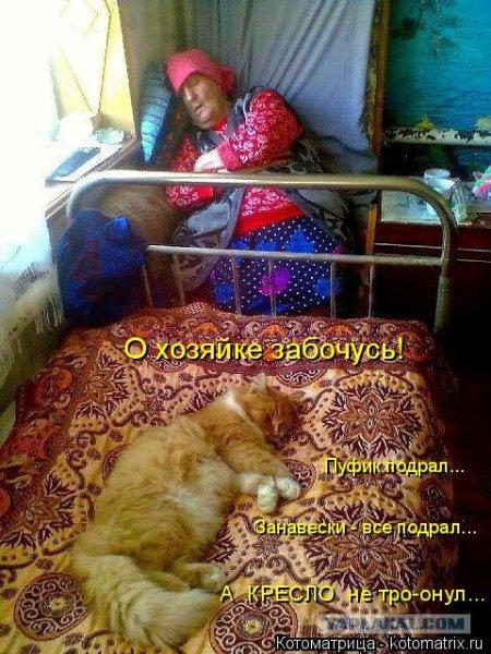 Котоматрицы, любовь через кота.