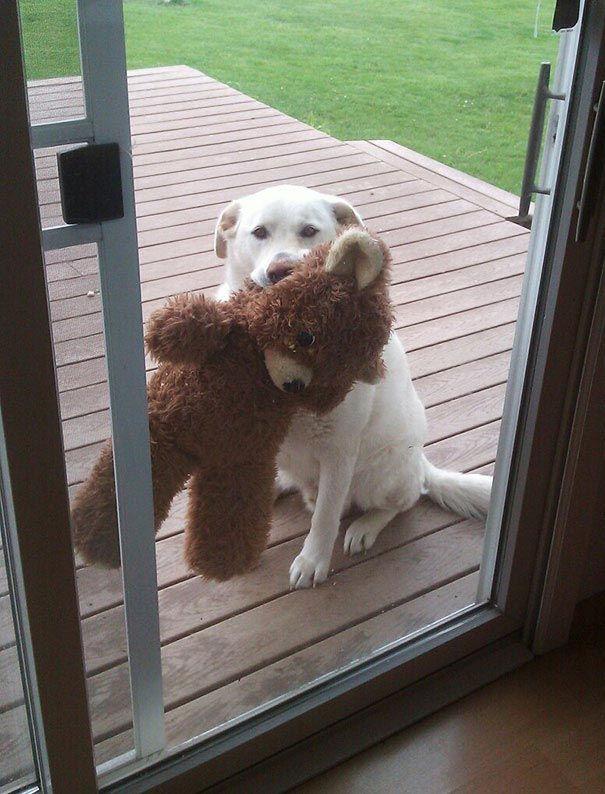 животные хотят в дом, животные хотят войти прямо сейчас
