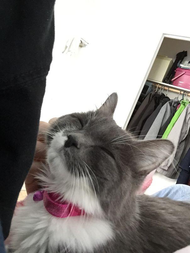 кошка улыбается, улыбающиеся коты, коты улыбаки