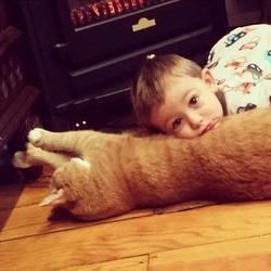 Трогательная дружба кота и ребенка