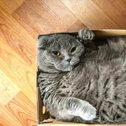 Коты и коробочки