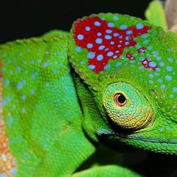 Новые виды Мадагаскара
