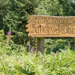 Как спасают медведей в Тверской области