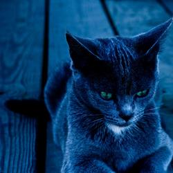 Как всегда прекрасные коты и кошки