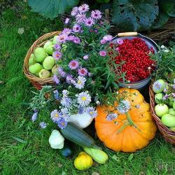 Огород без химикатов — 12 секретов бывалых дачников