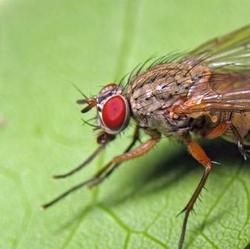 Опасные вредители капусты – как распознать и бороться?