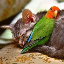 Невероятная дружба в мире животных