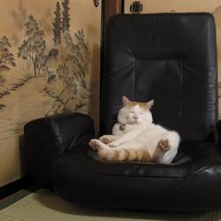 Кошки, которые расслабились по самое не могу…