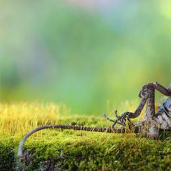 Привет из мира животных