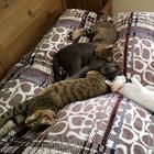 Человеческая доброта делает чудеса: сразу три слепых кота нашли новый любящий дом