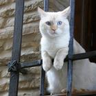 Коты, которые попались на месте преступления