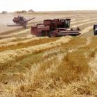 Китай запретил ввоз украинской продукции