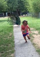 Фотожабы на убегающую от павлина девочку