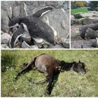 Да, животные так необычно спят