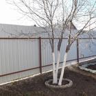 Состав побелки для плодовых деревьев