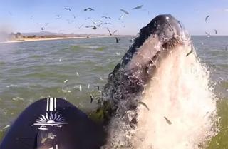 Серфингистка с флейтой приманила кита очаровательной мелодией