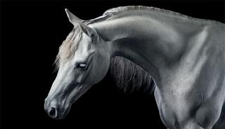 Когда мечты сбываются: история одного фотографа лошадей
