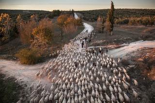 Финалисты экологического фотоконкурса Atkins Ciwem Environmental Photographer of the Year 2016