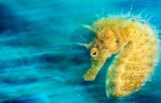 Сквозь толщу воды: самые красивые подводные фотографии