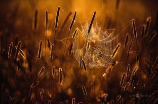 15 волшебных снимков природы финского фотографа Йони Ниемела