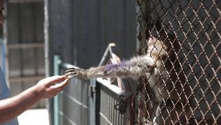 Надежда есть: в самый худший зоопарк в мире прибыли спасатели