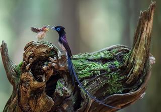 Мир заботливых птиц: 20 ярких фотографий пернатых со своим потомством