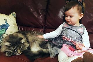 Такой не пропадёт: как кот потолстел и вернулся домой