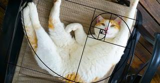 «Золотая середина» или почему коты идеальны