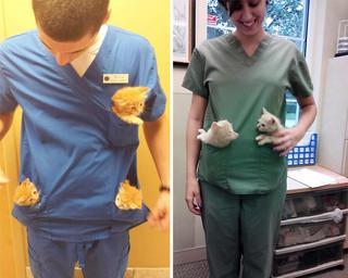Бонусы работы ветеринаром